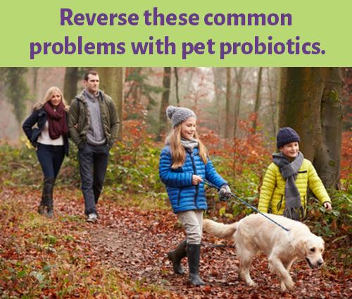 Mercola_Pet_Probiotics
