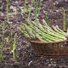 Grilled_asparagus_recipe