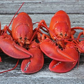 How_to_boil_lobsters